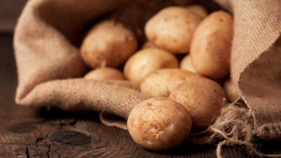 nicola kartoffeln